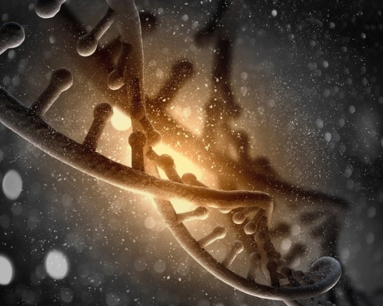 DNA , حامل اطلاعات ژنتیکی
